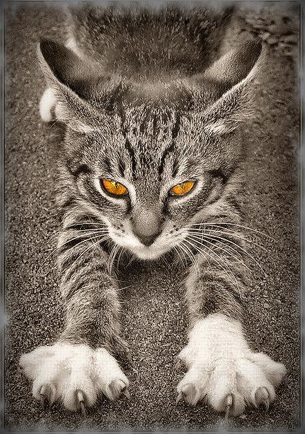 "photo ""Street Warrior"" tags: nature, black&white, pets/farm animals"