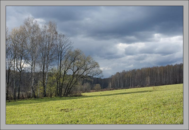 """photo """"April sketches"""" tags: landscape, forest, spring"""