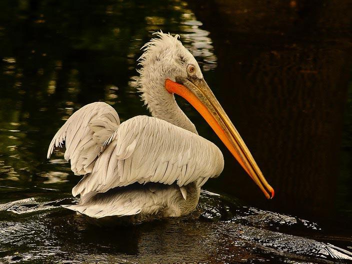 """фото """"Модельная причёска"""" метки: природа, дикие животные"""