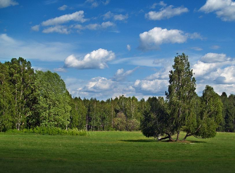 "фото ""***"" метки: пейзаж, лес, облака"