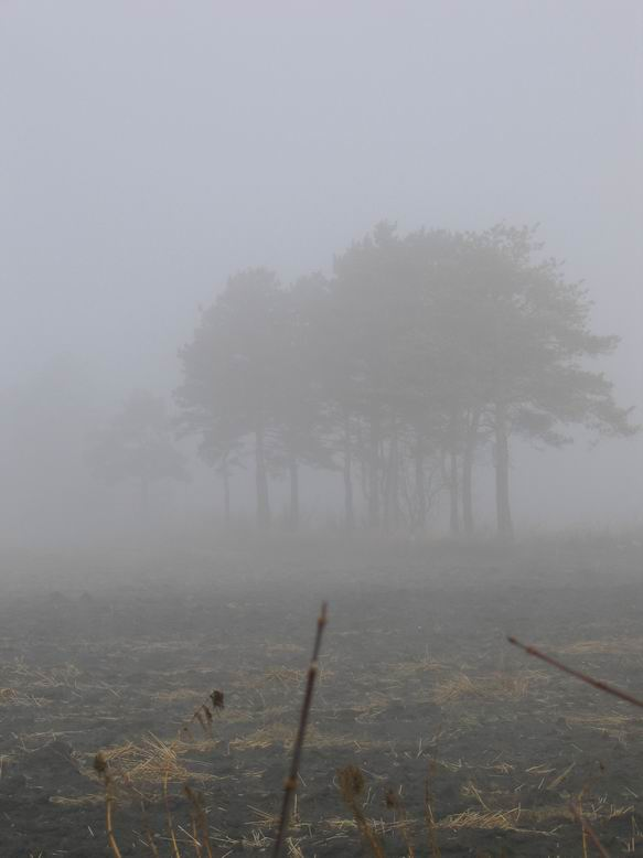 """фото """"в тумане"""" метки: пейзаж, лес"""