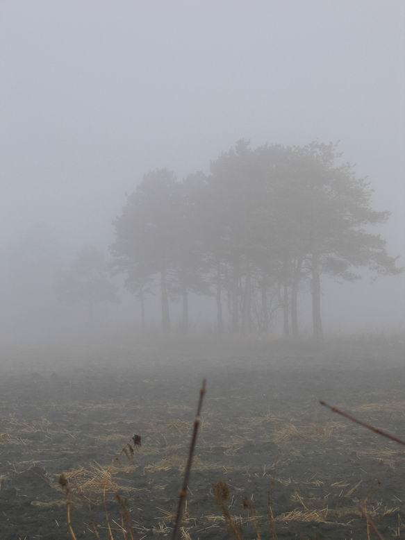 "photo ""в тумане"" tags: landscape, forest"