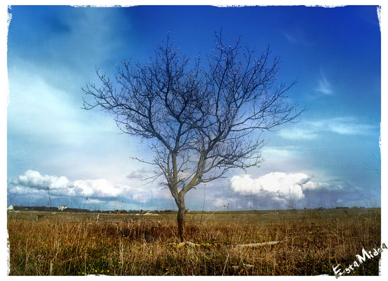 """фото """"Тоска?"""" метки: пейзаж, весна"""