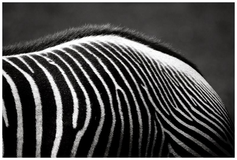"фото ""...point of view 1..."" метки: природа, черно-белые, дикие животные"