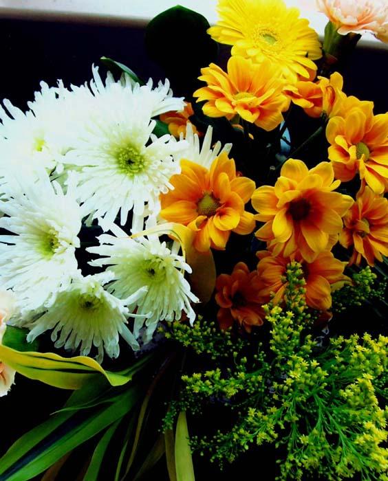 "photo """" Happy Birthday Tatjana """" tags: nature, macro and close-up, flowers"