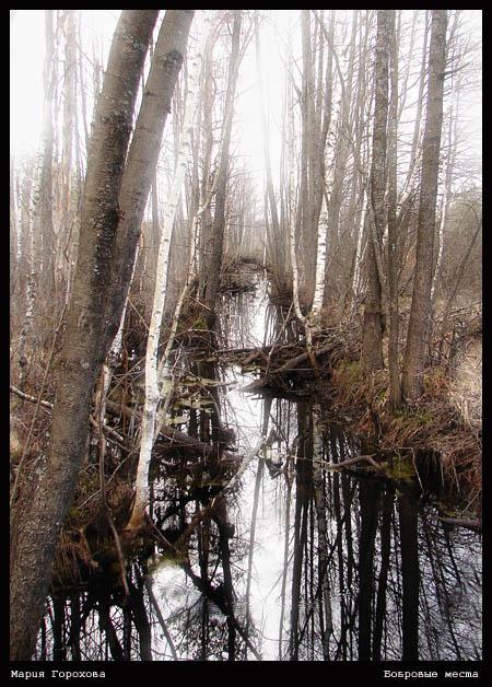 "фото ""Бобровые места"" метки: природа,"