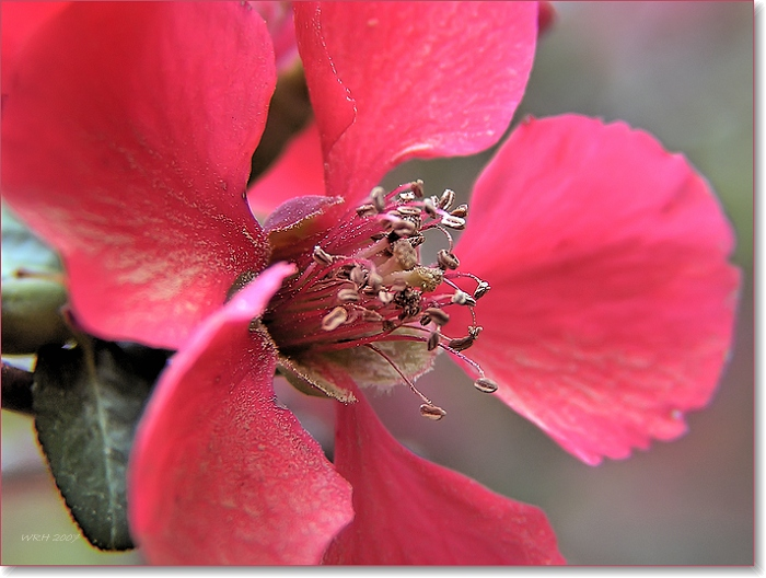 """photo """"Spring Pollen"""" tags: nature, landscape, flowers, spring"""