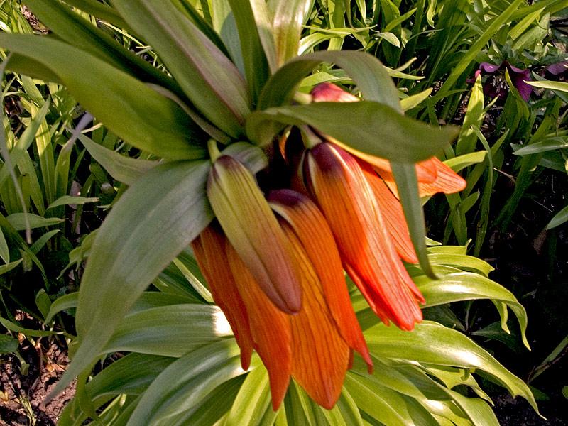 "фото ""New bud opening"" метки: природа, цветы"