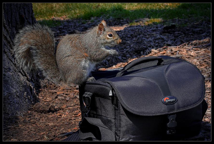 "photo ""Brave"" tags: nature, wild animals"