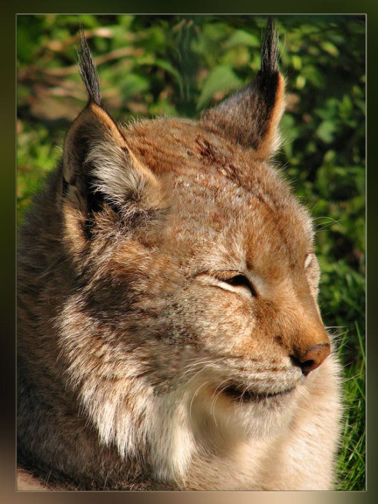 "photo ""***"" tags: nature, wild animals"