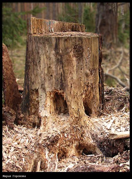 "фото ""Мышкин особняк"" метки: пейзаж, лес"