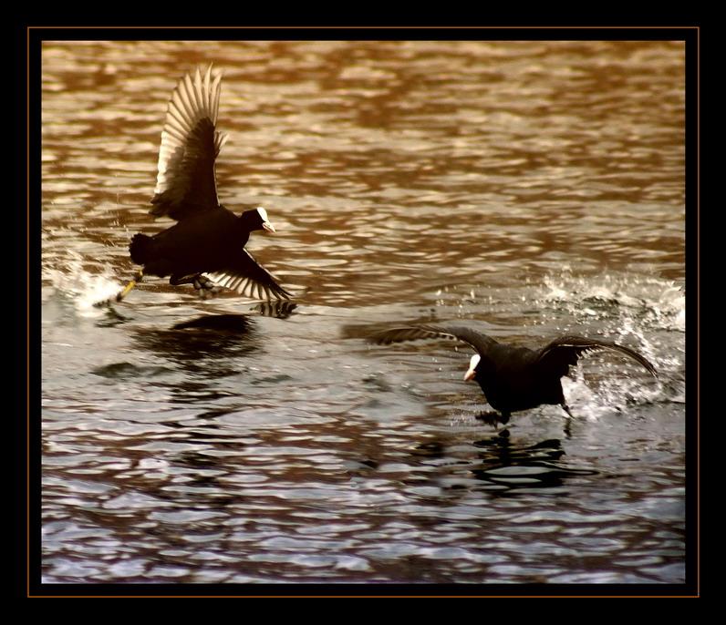 """фото """"Крутой вираж"""" метки: природа, дикие животные"""