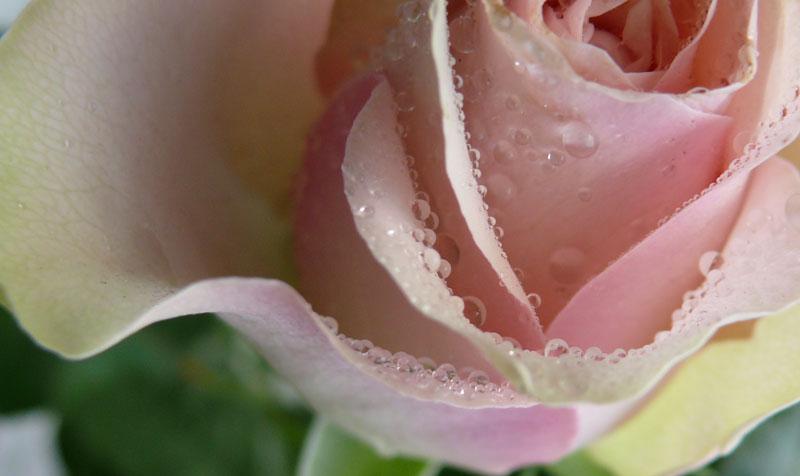 """фото """"001"""" метки: макро и крупный план, природа, цветы"""