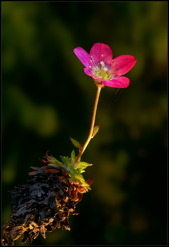 """фото """"y"""" метки: природа, макро и крупный план, цветы"""