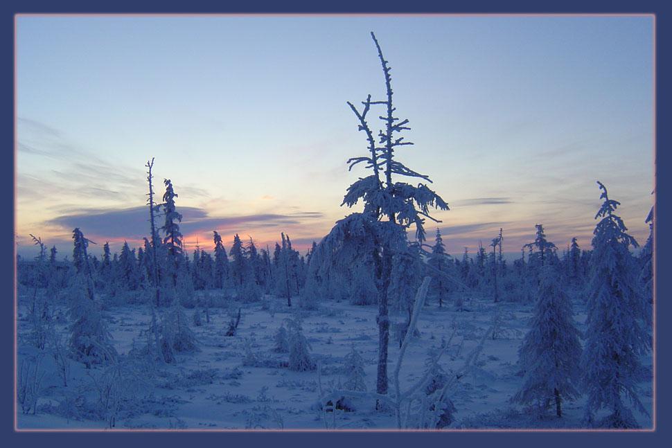 """фото """"Зимний вечер"""" метки: пейзаж, зима, лес"""