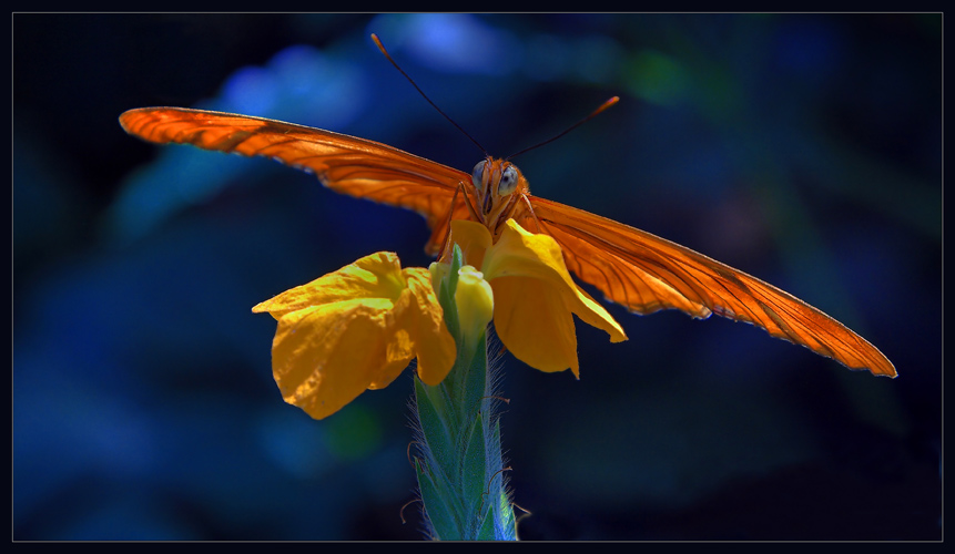"""photo """"Spreading the wings"""" tags: nature, flowers, insect"""