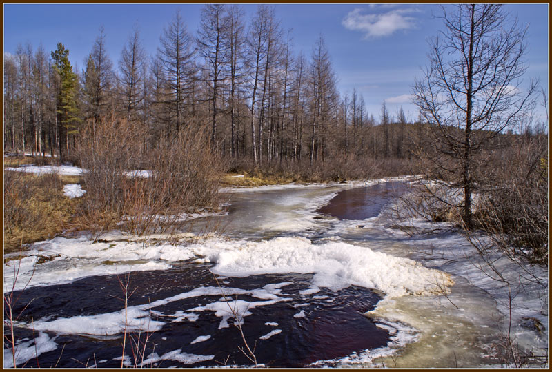 """photo """"The spring in taiga"""" tags: landscape, spring, water"""