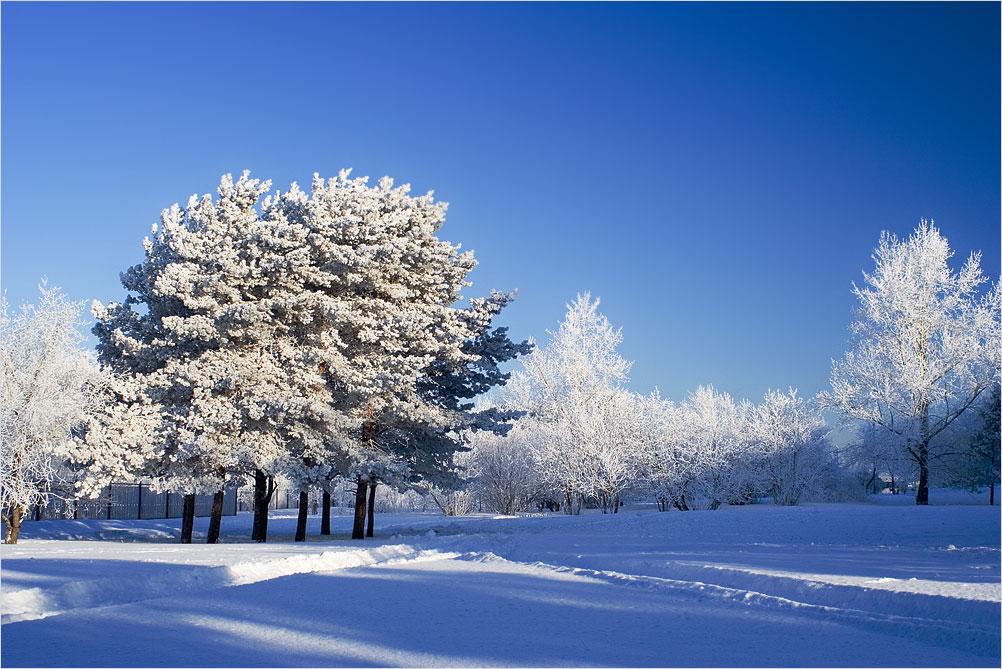 "photo ""blue"" tags: landscape, forest"