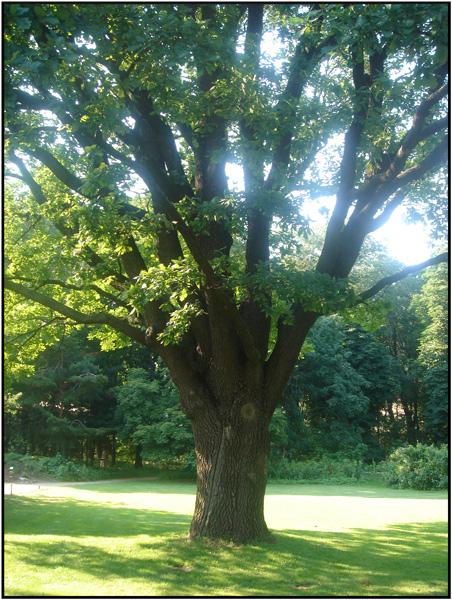 кажется, или бисквитное дерево фото целенаправленно выбирали