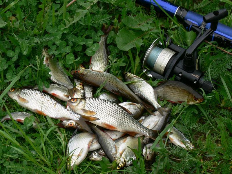 рыбалка с каркалыгами