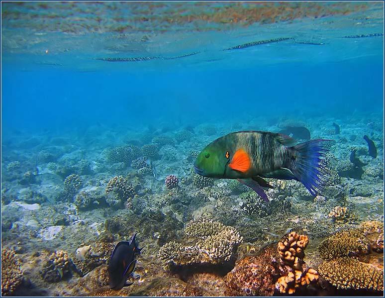 Фото подводный мир красного моря
