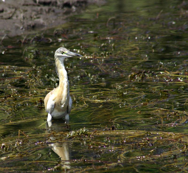 """фото """"bird"""" метки: природа, путешествия, Африка, дикие животные"""