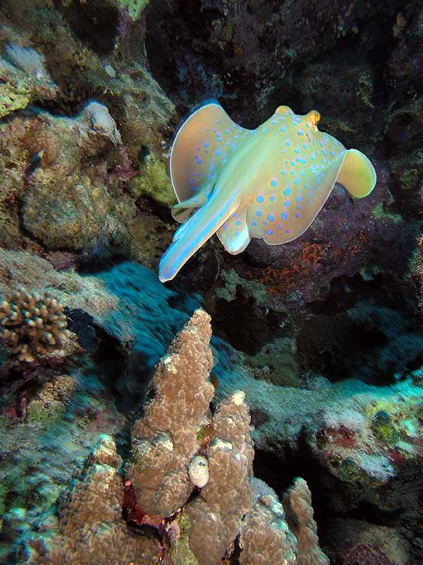 "photo ""Navigate"" tags: underwater,"