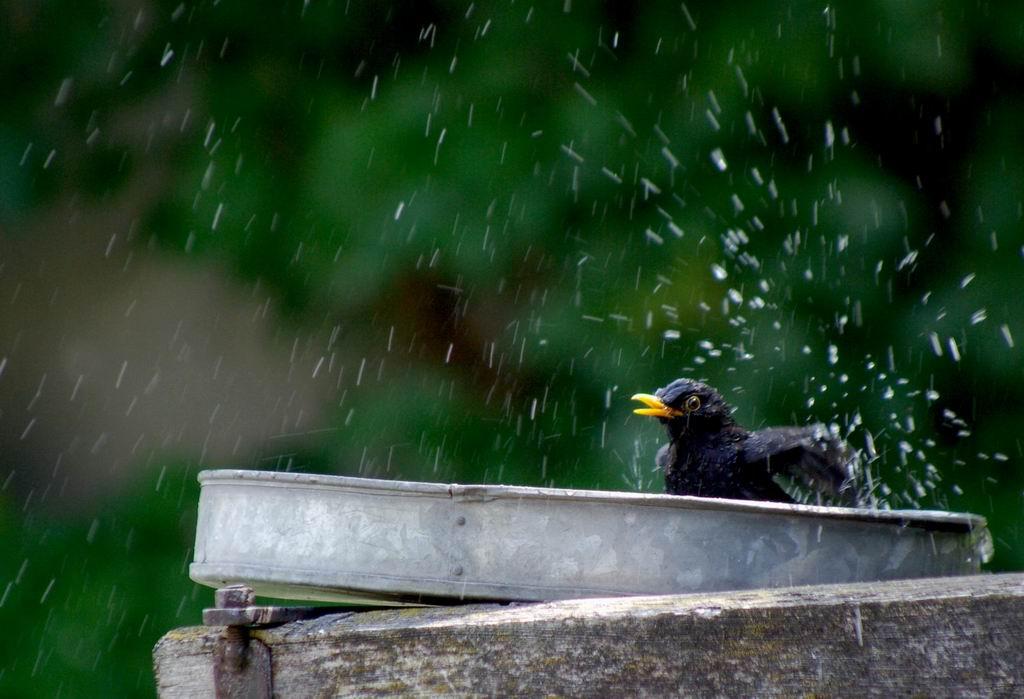 """фото """"washing"""" метки: природа, домашние животные"""