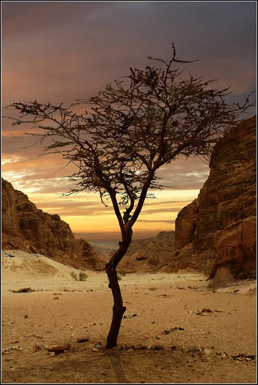 """фото """"Синайский лес. Вечер..."""" метки: ,"""