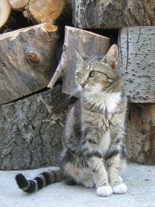 """фото """"Котик"""" метки: природа, разное, домашние животные"""