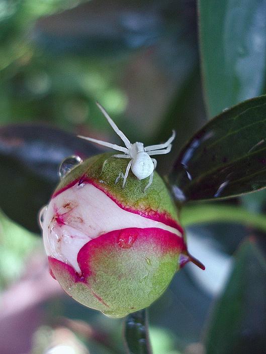 """фото """"Дирижер"""" метки: природа, макро и крупный план, насекомое"""