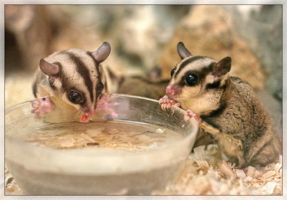 """фото """"НЕЧТО 2"""" метки: природа, дикие животные, домашние животные"""