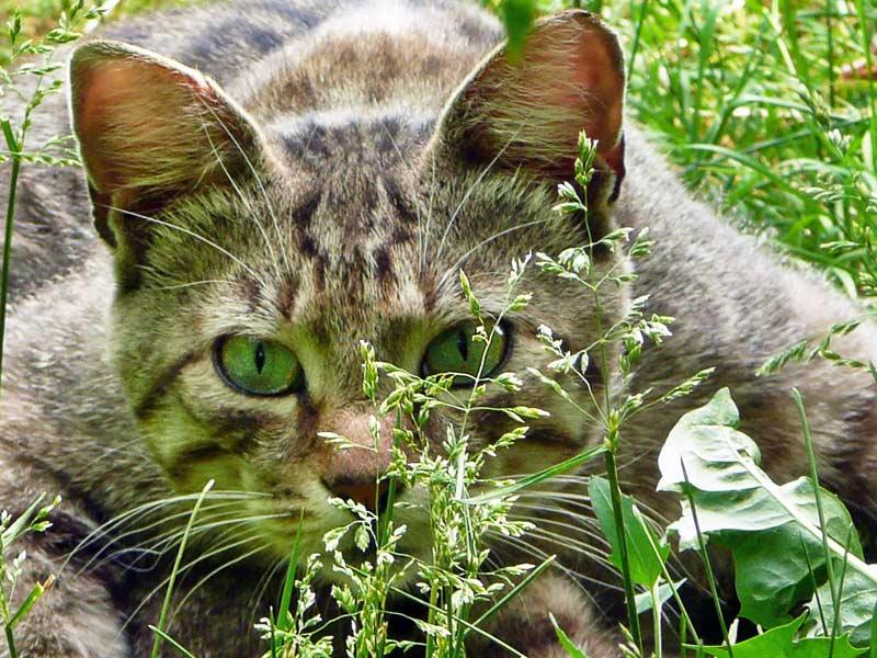 """фото """"На охоте"""" метки: природа, домашние животные"""