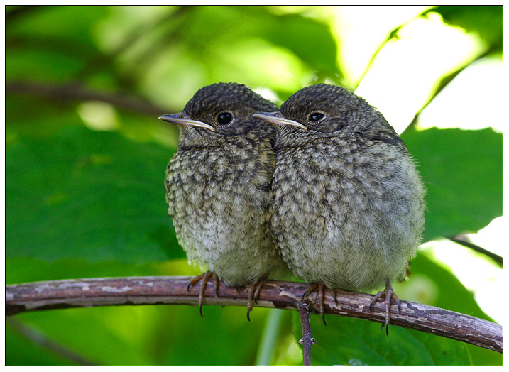 "фото ""Двойняшки"" метки: природа, дикие животные"