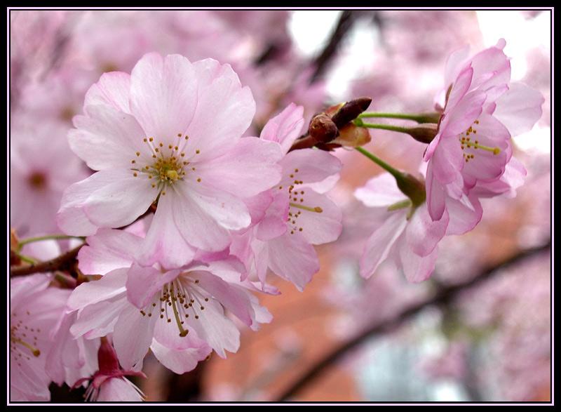 """фото """"возвращение ))"""" метки: природа, цветы"""
