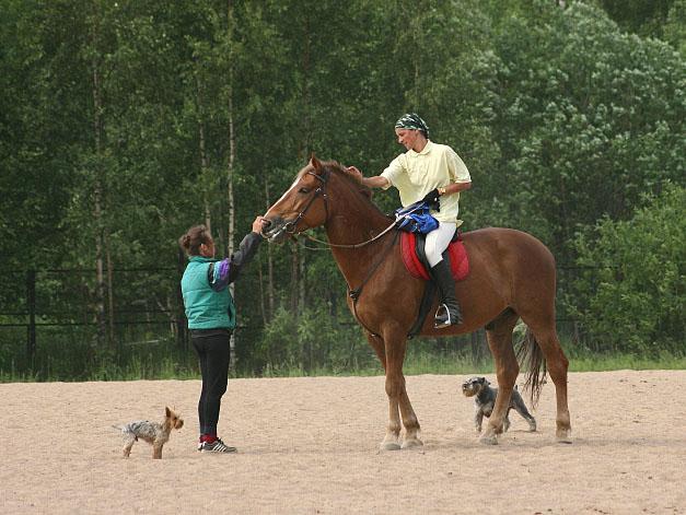 """фото """"В Колтушах (последняя с этой лошадью и этой наездницей)"""" метки: природа, домашние животные"""