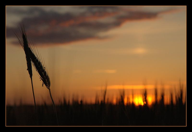 """фото """"Нежность"""" метки: пейзаж, природа, закат, цветы"""