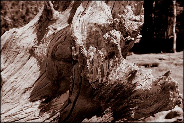 """фото """"Dead Wood"""" метки: пейзаж, лес"""