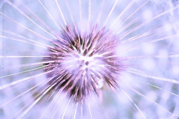 """фото """"Точка опоры"""" метки: природа, макро и крупный план, цветы"""