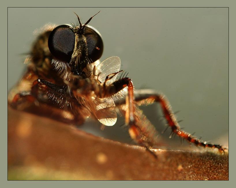 """фото """"Портрет в обеденный перерыв .эпизод 2."""" метки: макро и крупный план, природа, насекомое"""