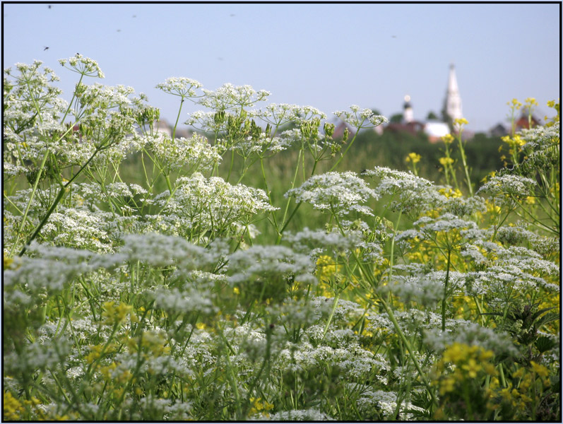 """фото """"Комары, трава и ГРИП"""" метки: природа,"""
