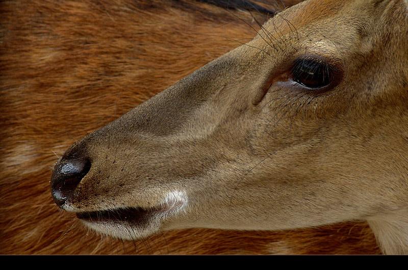 """фото """"Look into my eyes..."""" метки: природа, дикие животные"""