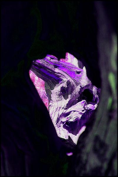 """фото """"Torment"""" метки: абстракция, натюрморт,"""