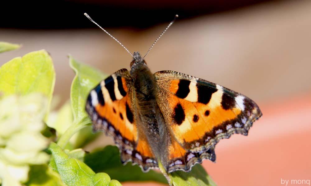 "фото ""but_fly"" метки: природа, насекомое"