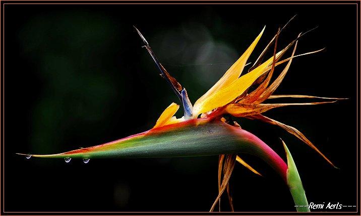 """фото """"after the rain"""" метки: природа, макро и крупный план, цветы"""