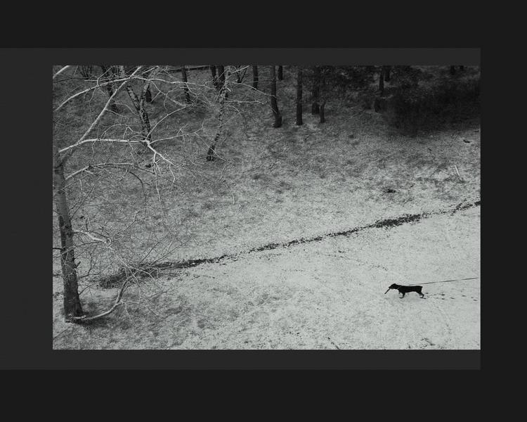 """фото """"Ожидание"""" метки: пейзаж, природа, домашние животные, зима"""