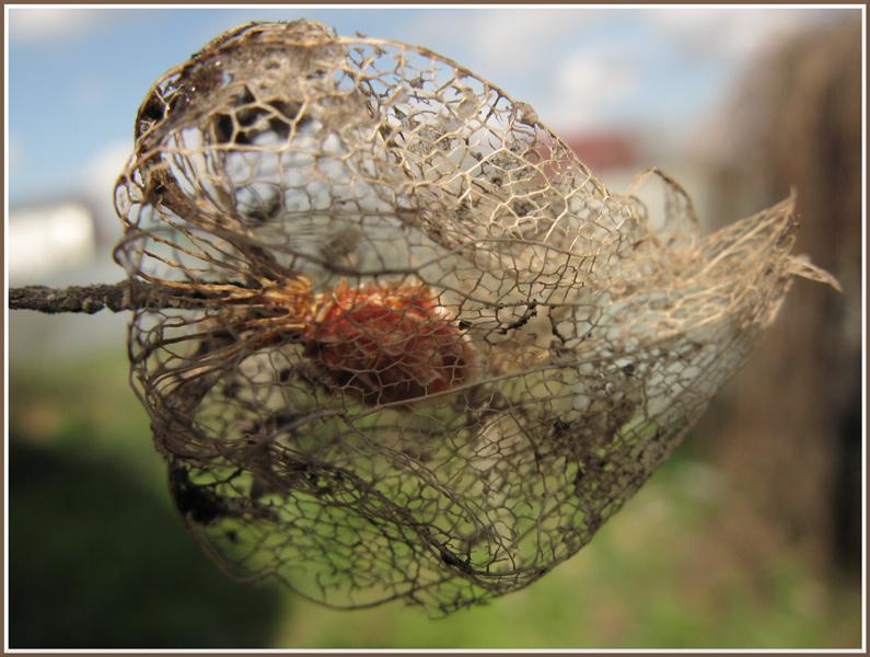 """фото """"бывший цветком"""" метки: природа, цветы"""