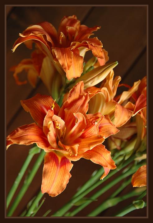 """фото """"Лилии"""" метки: природа, цветы"""