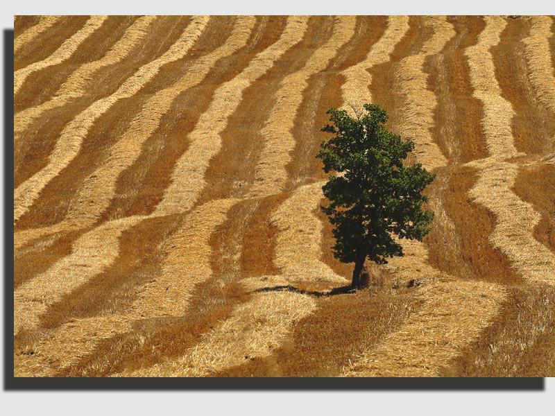 """фото """"Harvest Time"""" метки: пейзаж,"""