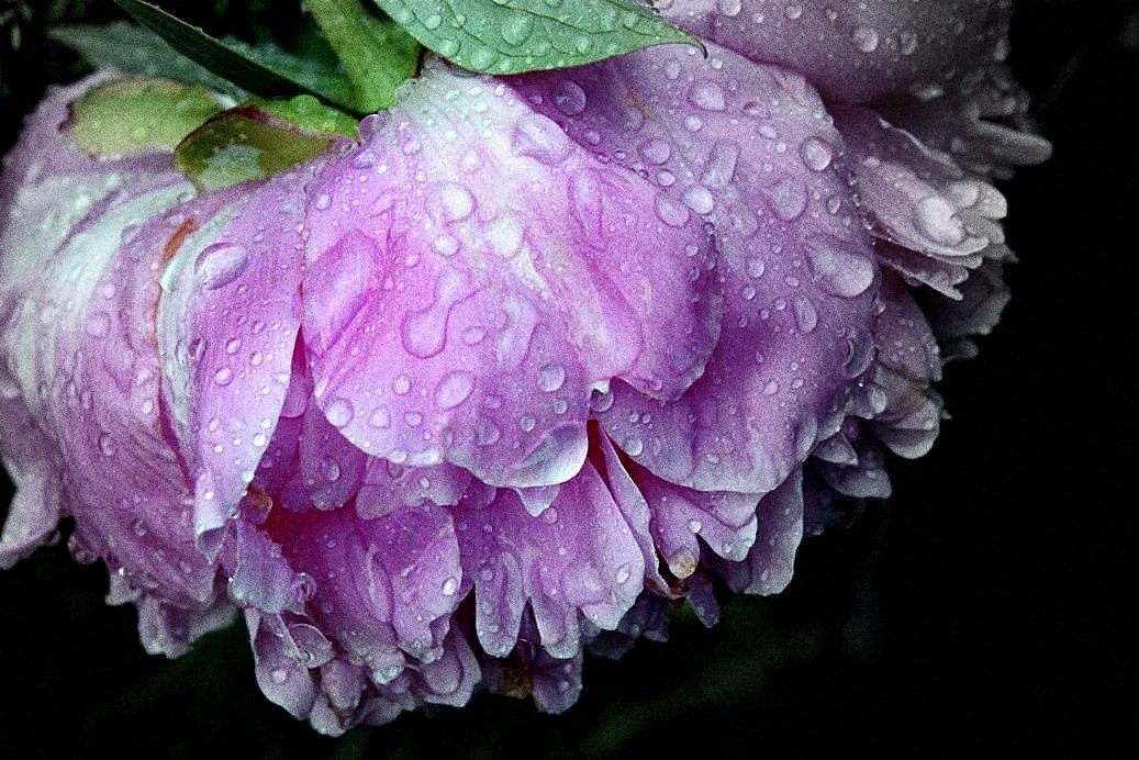 """фото """"После  дождя"""" метки: макро и крупный план, природа, цветы"""